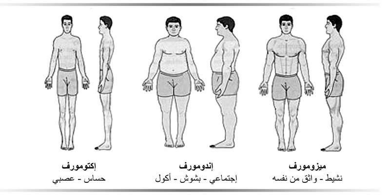 البنية الجسدية Somatotype